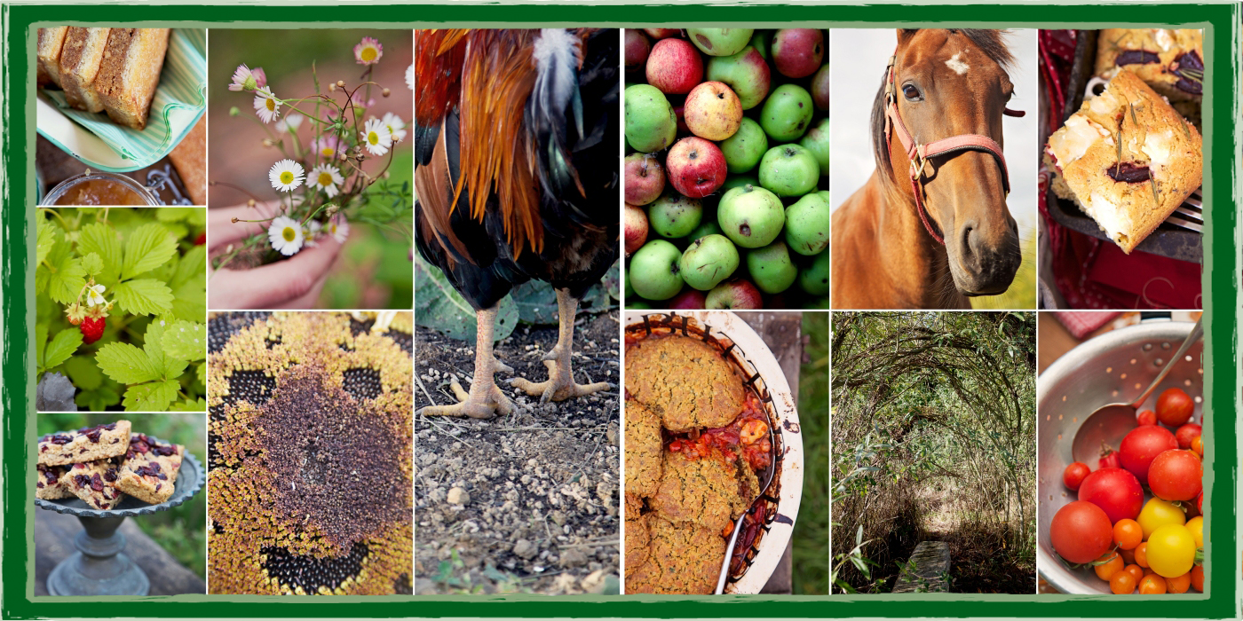Montage of various vibrant beautiful photos of  plants, horses, cockerel, sunflower head, cakes and tomatoes.
