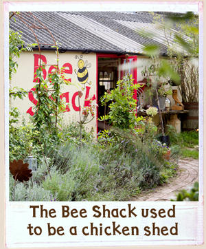 Converted chicken shed with red open door and Bee Shack lettering on the wall, surrounded by plants and lavender