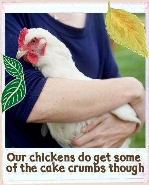 Beautiful white chicken with red comb being cuddled in arms of a lady with a blue top on.