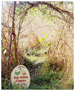 vole willow coppice