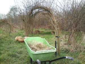 Dead grass in wheelbarrow