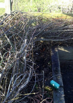 Hedgelaying at Honeybuns