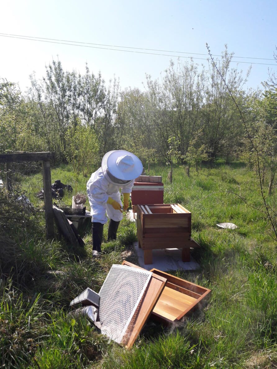 Jacqui putting bees in their new hives