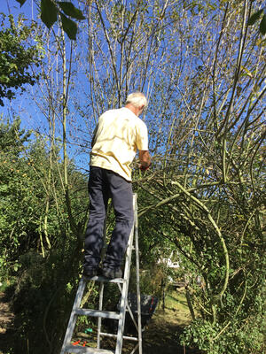 work in our nature reserve on the willow trees and hedges