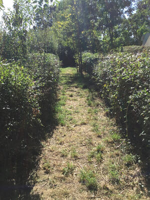 Hedgelaying at our commercial bakery