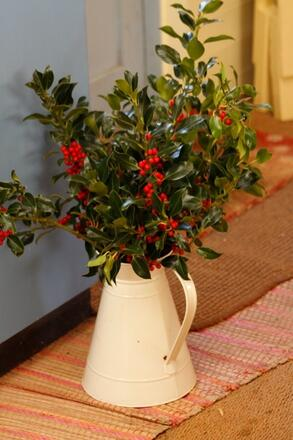 Holly in pitcher