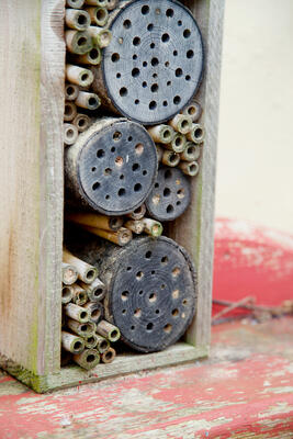 homemade bee houses