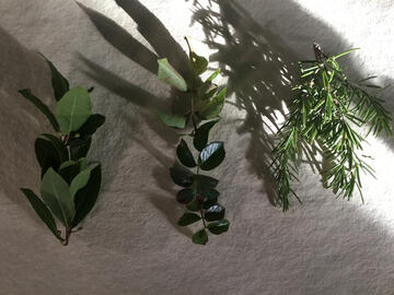 Buch of rosemary, laurel and bay