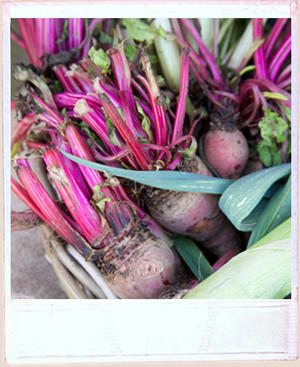 Fresh beetroot with their stalks and roots, lined up in a a basket